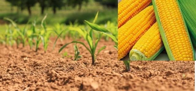 >>>Avis aux producteurs de maïs consommation relatif à la campagne 2017 >>>Autorisation production maïs consommation 2017